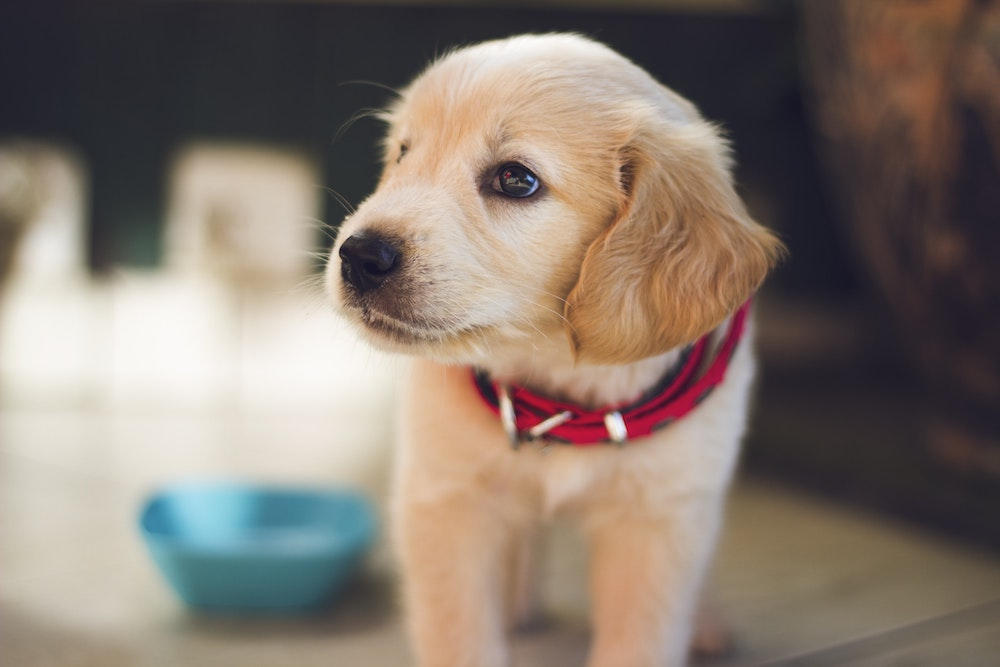 pet health insurance Cape Girardeau MO